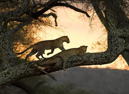Imagen de Afrika