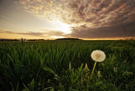 Imagen de Nature